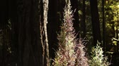 bosques : Tall grass grows next to a dark, lonely tree in the forest. California