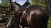 родословная : Slow motion shot of a woman grooming a horse with a currycomb. Filmed with a high speed camera