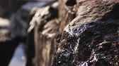 bystřina : Racking focus of water cascading over rocks shifting from close-up to medium shot. Shot at Emerald Bay State Park,Lake Tahoe,California Dostupné videozáznamy