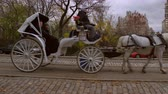 desenhado : Slow panning shot of two horse drawn carriages in NYC.