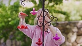 greenhouse : Static view of woman hanging up hummingbird feeders on a metal holder. Stock Footage