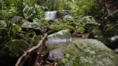 wood : Tracking shot of a waterfall in the lush Tijuca National Park in Rio de Janeiro. Shot on June 24, 2013.