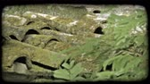 musgo : Close-up shot of shingles on a roof covered in moss with a tree in the foreground. Vintage stylized video clip. Stock Footage