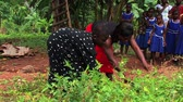 Medium shot. Deaf girl works in the garden with her family in a village in Ghana. Stok Video