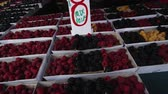 amoras : Pan of fresh blackberries and rasberries for sale at an open market in San Francisco
