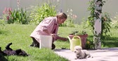greenhouse : Static view of woman weeding in yard, while one dog rolls in grass.