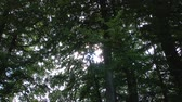 mysterious : A long, slow zoom more than 20 x into magical flickering lights of the sun in the canopy spelled forest. Original audio included. Stock Footage