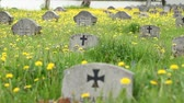 pedra tumular : World War II , war grave. of a german soldier, in a military cemetery, with grass and dandelions, on sunny day. Vídeos