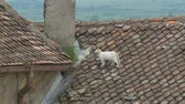 imóvel : A cat on the roof of an old house with tiles on.