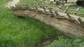 bridge across the river : Primitive Wood Footbridge