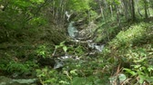 Beautifull waterfall in Carpathian Mountains Forest.