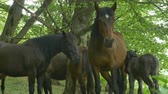 A group of wild horses waiting in the forest.