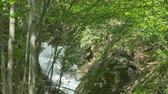 Fast water stream running on a ravine in the Carpathian Mountains. Stock Footage