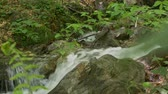 Close up shot of water stream in the forest