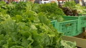 View of organic lettuce at local market.