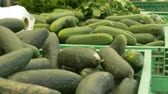 View of organic fresh cucumbers at local market.