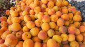 paketlenmiş : View of fresh apricots for sale at local market.