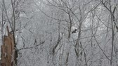 восхождение : View of a squirrel on the snowed trees, Стоковые видеозаписи