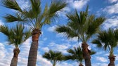excesso de velocidade : Palm tree moving cloud time lapse passing speeding overhead concept travel fast time Vídeos