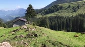 защита : Impressions of the Ackernalm in Tyrol  Austria