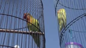 papoušek : Video of parrot birds over blue sky background during summer sunny day - video in slow motion