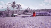 crochê : Purple or violet colored footage of beautiful young woman in red transparent dress walking along the rice field - video in slow motion
