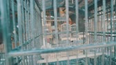 imprisoned : Video of common Hill Myna bird in cage on the traditonal market in Bali, Indonesia