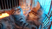 uykulu : Small adorable kittens sleeping in the old bird cage