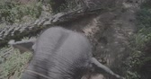 Top view of elephant ride through jungle. Closeup of elephants head walking slowly trekking trail