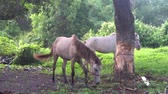 oyun alanı : Two beautiful horses eating, playing, walking at small field in Thailand