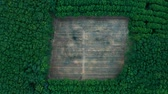 zumbido : Deforestation - top view aerial view in tropical forest