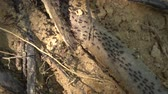 podre : Closeup of many terrestrial termites on the tree branch