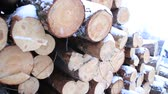 lumbering : Snowy log stack lumber in winter. Woodpile of pine