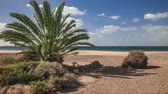 green palm at Playa de Papagayo beach on Lanzarote weighs in the wind