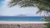 sen : green palm tree at the Playa de Papagayo beach on Lanzarote