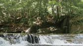Water flow in downfall river with rocks in the forest Stock Footage