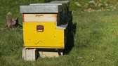 Wooden beehive or apiary for pollinating bees in the nature Stock Footage