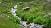 Creek stream flowing fresh water in the nature (4k) Stock Footage
