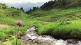 Wild mountain panorama from the French Alps with flowing stream in the foreground (4K) Stock Footage