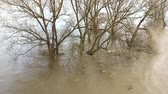 německo : Above pan shot of the river Rhine flooding trees (HD)