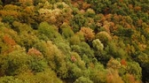klid : Aerial tracking shot over German desidiuous forest landscape during summer (HD)
