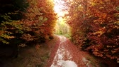 Tracking shot on a forest road during fall with colorful foliage and fall leaves