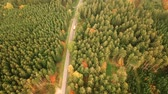 Aerial birds eye view of country road during autumn with vehicles Stock Footage