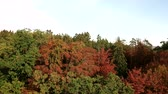 Aerial tracking shot in forest treetops with colorful foliage during autumn