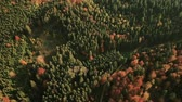 Birds eye tracking shot of colorful autumn forest landscape in Bavaria, Germany