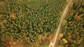Aerial tracking shot of empty country road running through autumn forest landscape Stock Footage