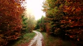 Tracking shot along a gravel road in autumn forest with colorful trees