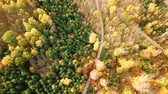 Birds eye tracking shot of a colorful forest landscape with road during fall season ( Stock Footage