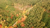 caso : Aerial shot of country road running through forest landscape during winter season
