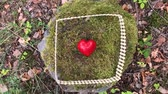 kerítés : Red heart fenced on moss in a forest (Full HD)